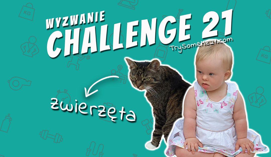 CHALLENGE 21 – ZWIERZĘTA!